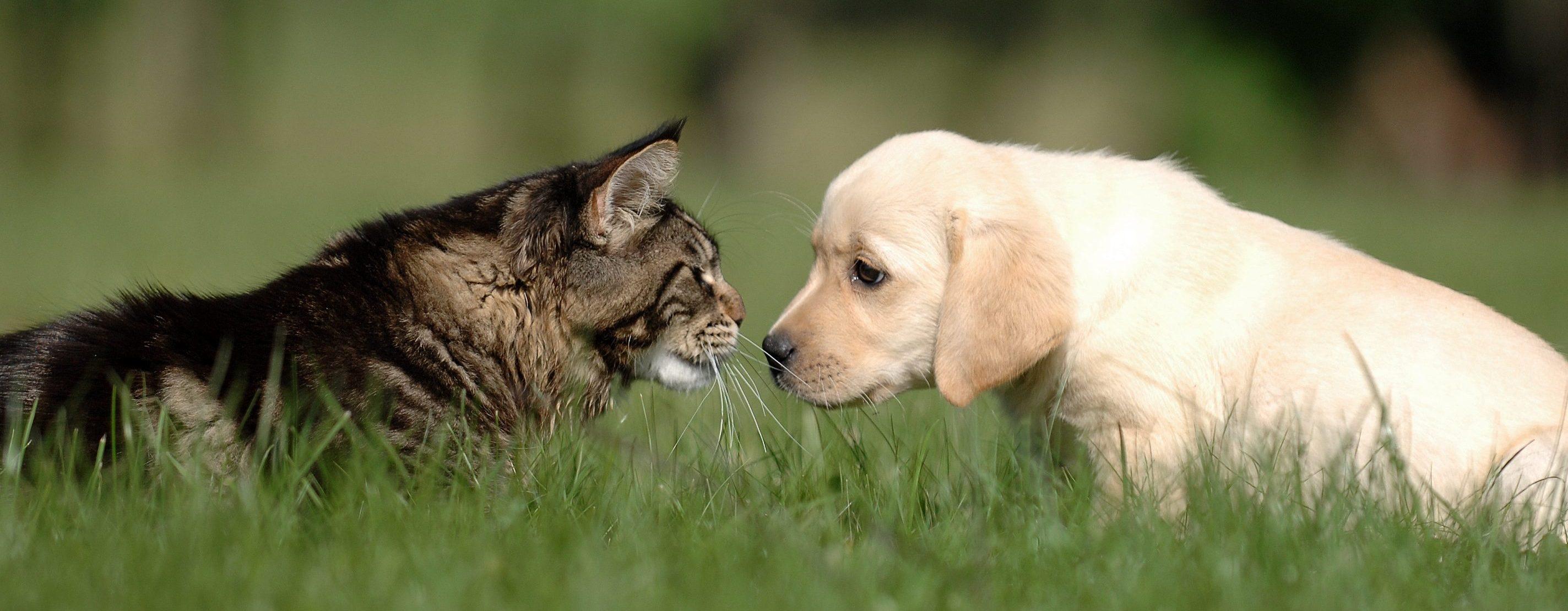 Cat Kissing Dog Gif