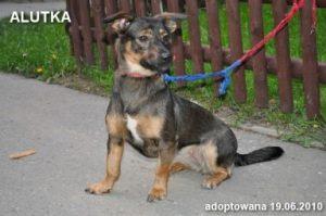 alutka-19-06-2010-384x255