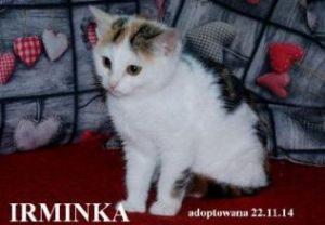 irminka1-316x219