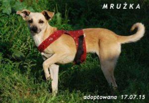 mruka-1-303x211