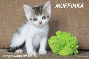 muffinka-313x209