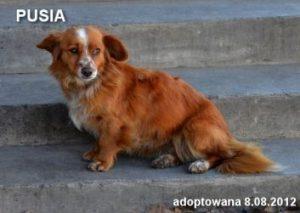 pusia-8-08-2012-353x251
