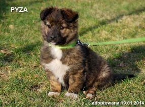pyza-19-01-2014-286x211