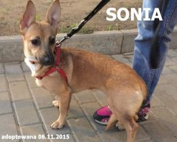 sonia-258x207