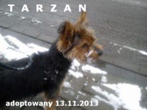 tarzanek-321x241